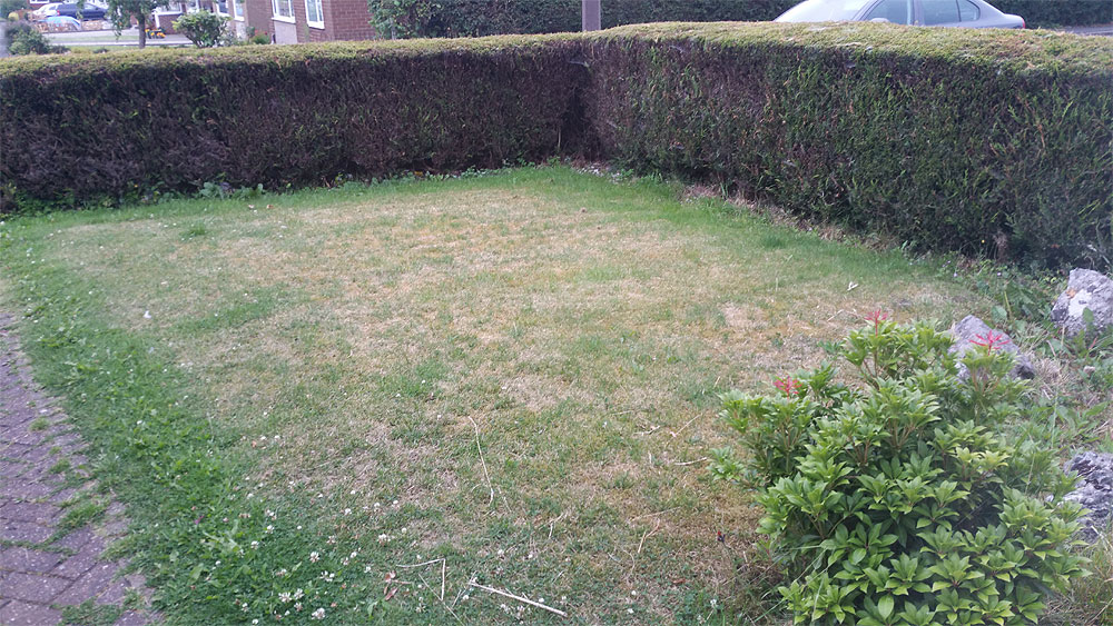 Front lawn needs moss removal in Bolton
