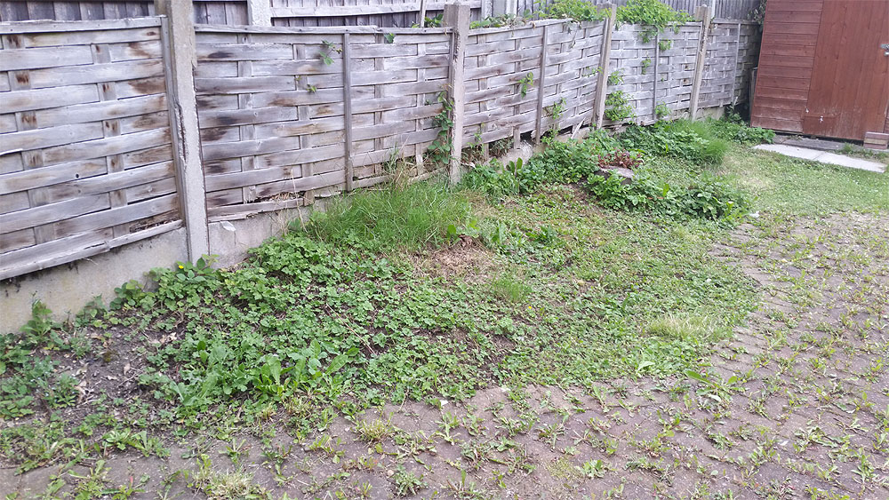 Block paving and garden overgrown with weeds in Bolton