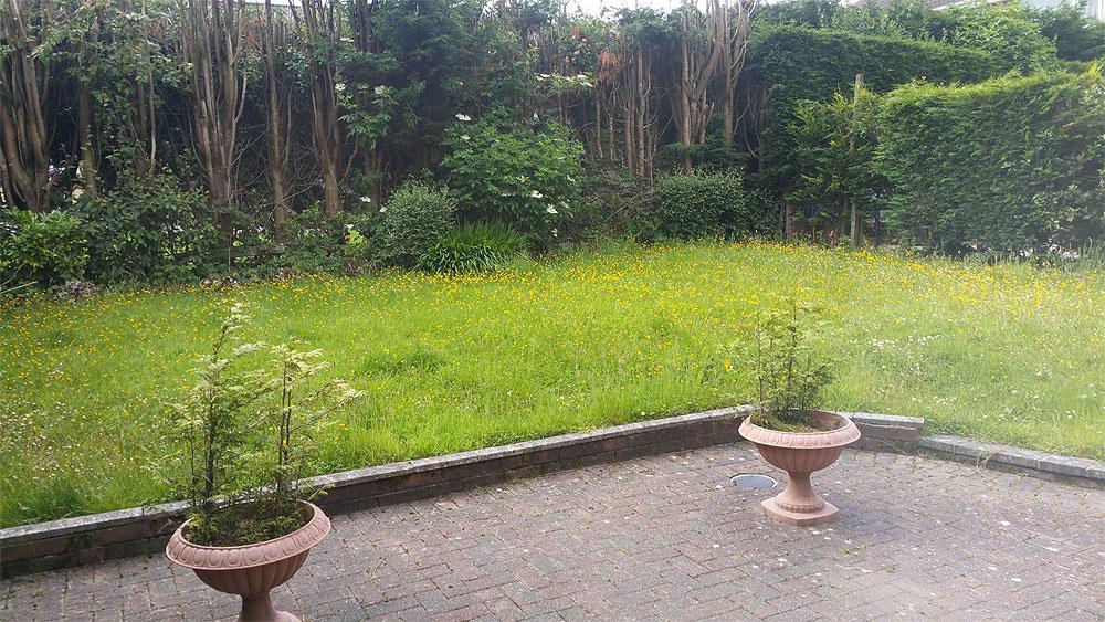 overgrown garden in Bolton