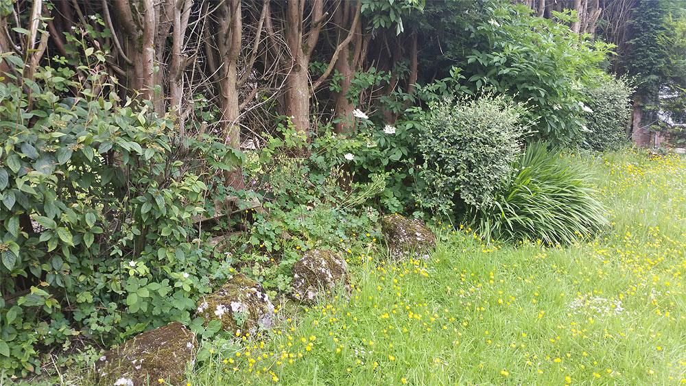 Garden Border need Tidying in Bolton